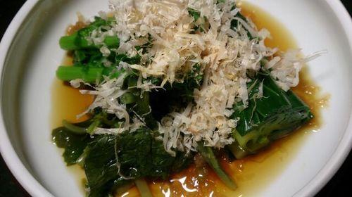 160411山菜2.jpg