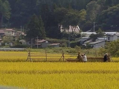 170930稲刈り2.jpg