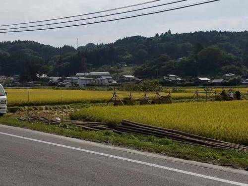 170930稲刈り3.jpg