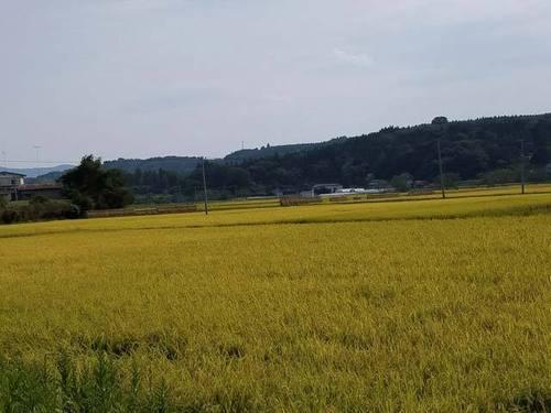 170930稲刈り4.jpg