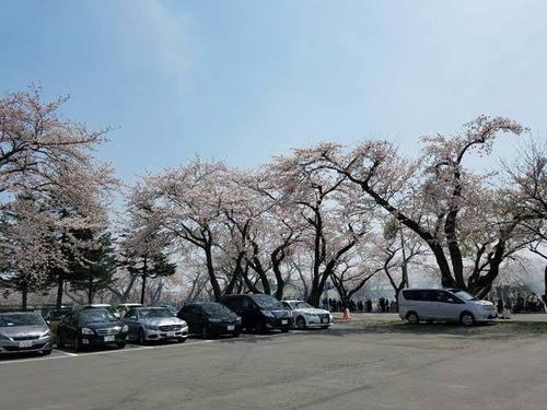 180425桜4.jpg