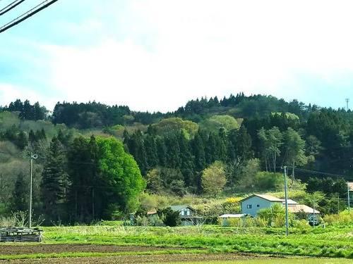 180507山笑う2.jpg