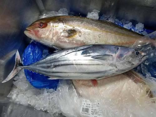 180714魚1.jpg