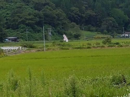 180907水田2.jpg