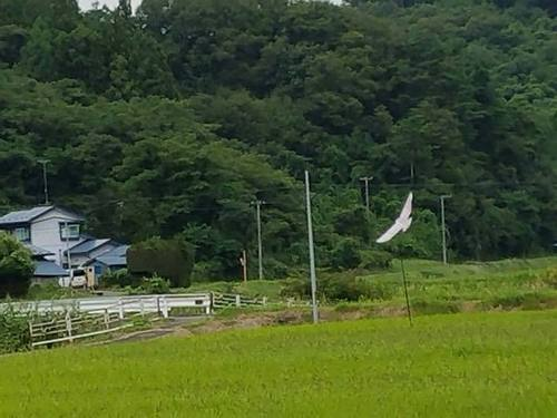 180907水田4.jpg