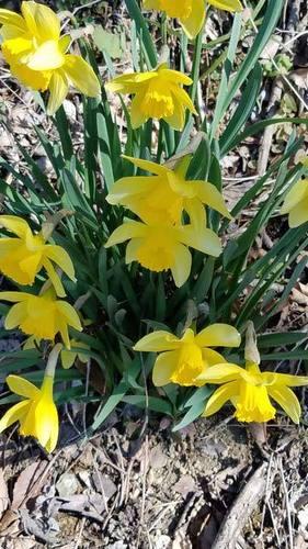 190422春の花1.jpg