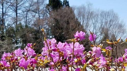 190422春の花2.jpg