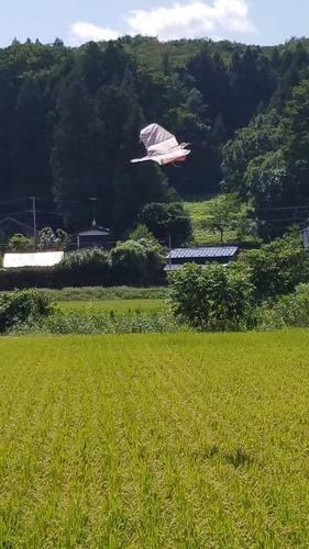 190831水田1.jpg