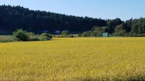 191004田んぼ1.jpg